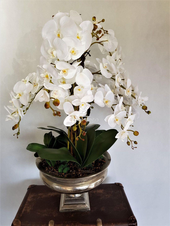 biały storczyk w pięknej donicy